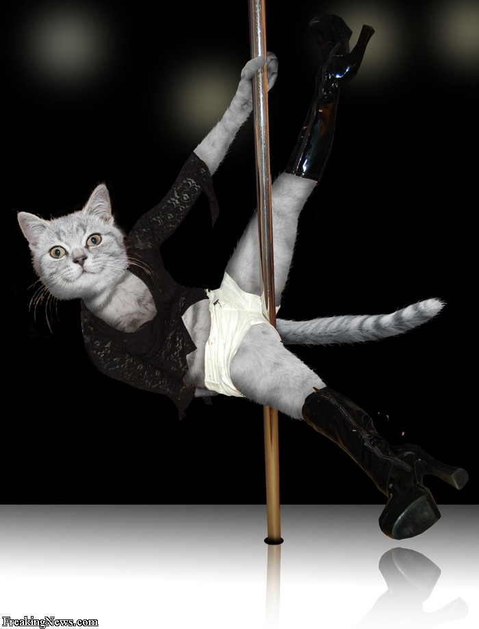 Cat Pole Dancing Video